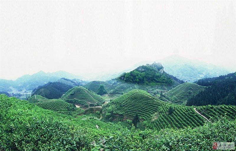 """""""狗牯脑杯""""白鹤仙全国山地自行车爬坡赛暨遂川县第二"""